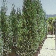 Buitenbomen div. soorten en maten