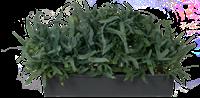Combinatie-beplantingen en roomdividers,zuilen