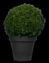 Planten tot 125cm